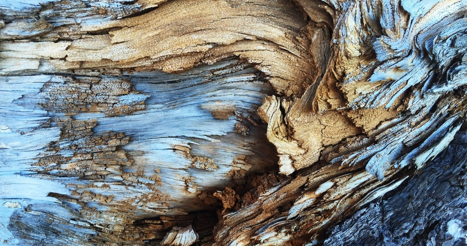 woods-bark-abstract